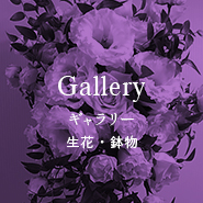 Gallery 生花・鉢物